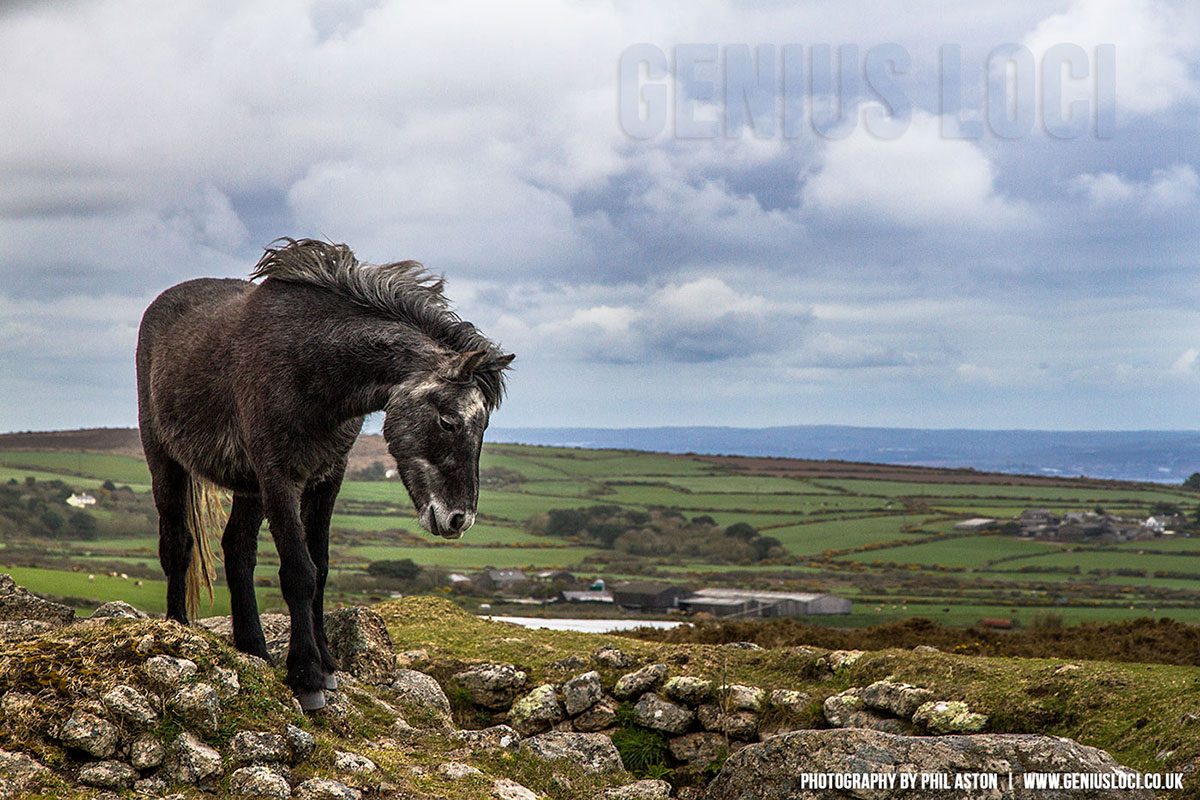 Carn Brea Cornwall